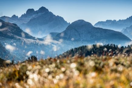 Forest Breathing in the Dolomites